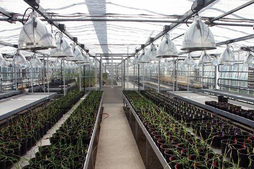 Invernadero Reylux para investigación en la Estación Experimental de Aula Dei - CSIC (Zaragoza)