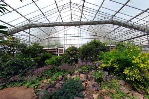 Invernadero Reylux R15 de cristal y policarbonato en Jardín Botánico de Córdoba