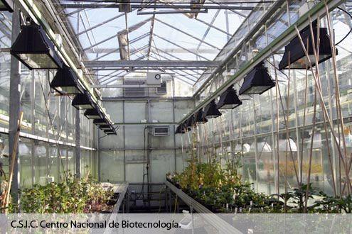Interior de invernadero caliente e inteligente Reylux en el Centro Nacional de Biotecnología del C.S.I.C.