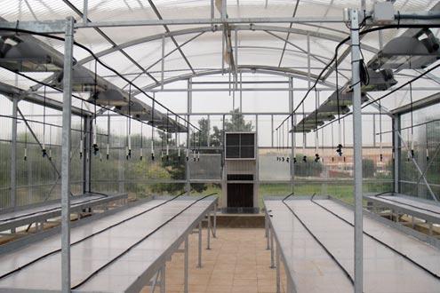 Interior de Invernadero Reylux. Instalación de emisores de doble propósito sobre mesas de cultivo
