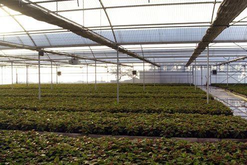 Invernadero Multitúnel Agrolux para vivero de producción.