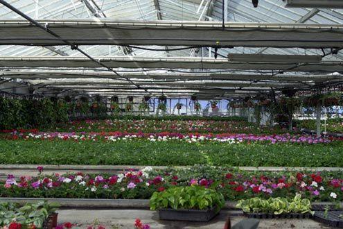 Interior de invernadero Reylux para vivero de planta ornamental