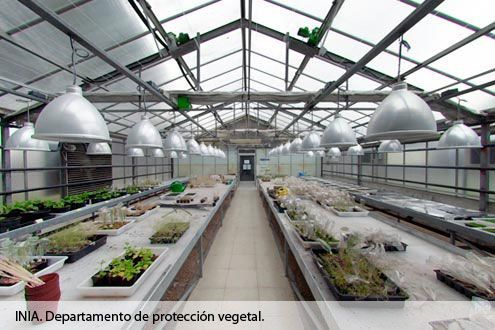 Interior Invernadero Departamento de Protección Vegetal del INIA