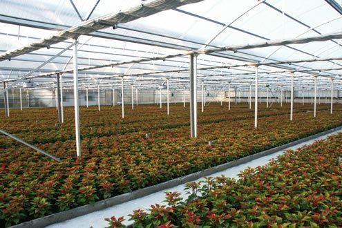 Invernadero Multitúnel Agrolux para planta ornamental