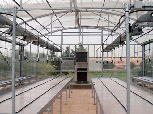 Riego en mesas de cultivo dentro de invernadero.