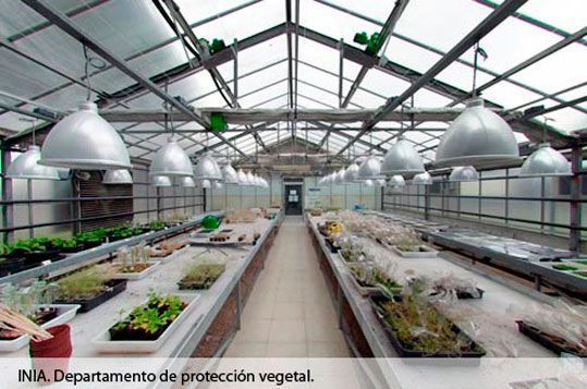 INIA. Departamento de protección vegetal