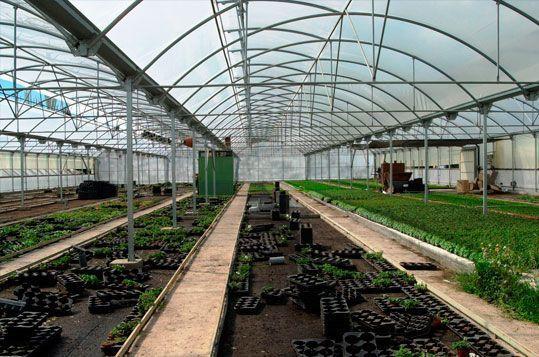 Invernadero Multitúnel Agrolux Sistemas D,R, para producción de planta ornamental