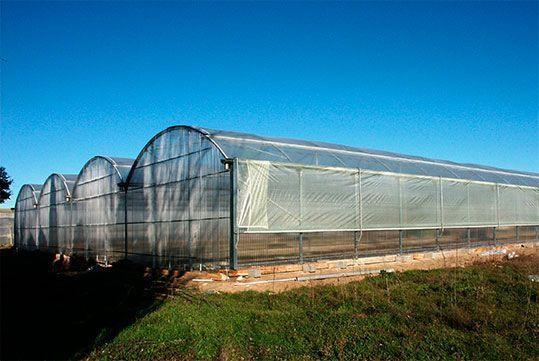 Invernadero multitúnel Agrolux con cubierta de polietileno