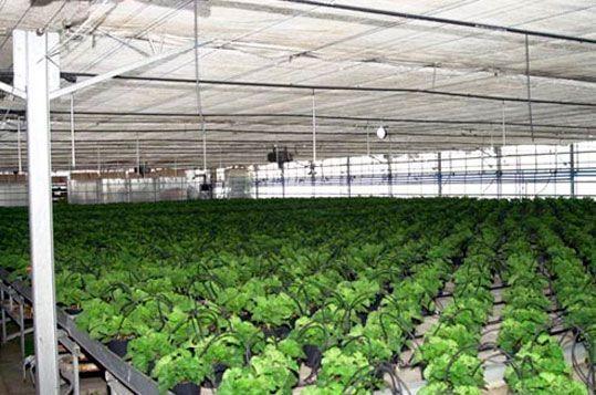 invernadero-produccion-plantas