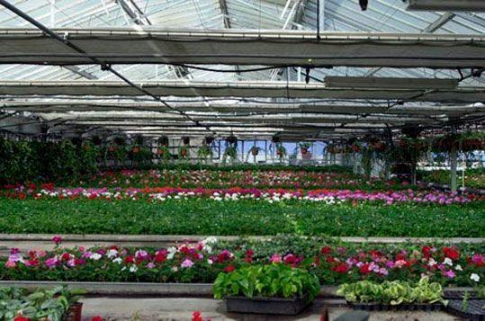 invernadero-reylux-vivero-planta-ornamental