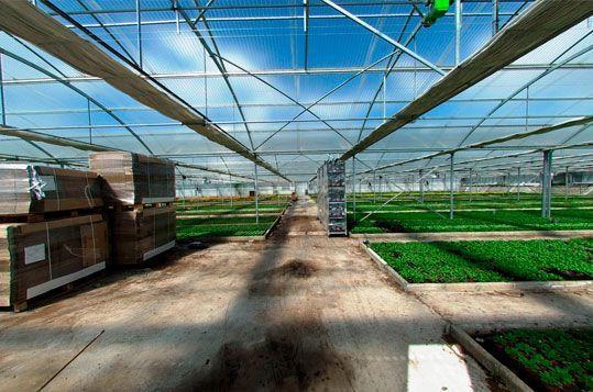 invernaderos-de-cultivo