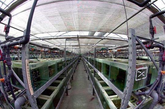 invernaderos-para-acuicultura
