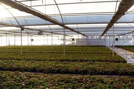 invernaderos-para-vivero-de-produccion