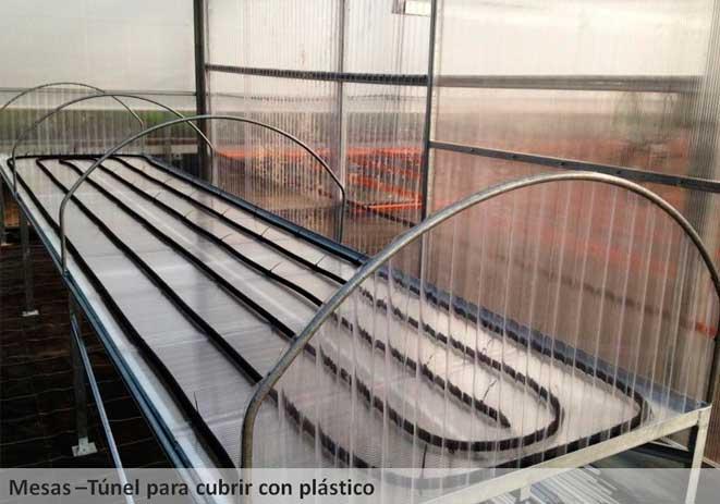 Mesas de cultivo túnel para cubrir con plástico