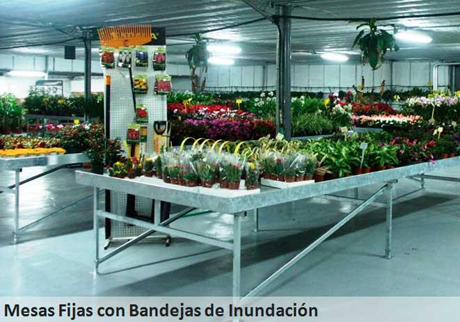 mesas de cultivo fijas con bandejas de inundación
