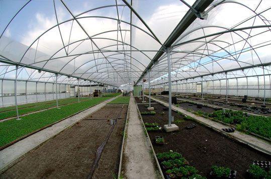 Multitúnel Agrolux para vivero de producción